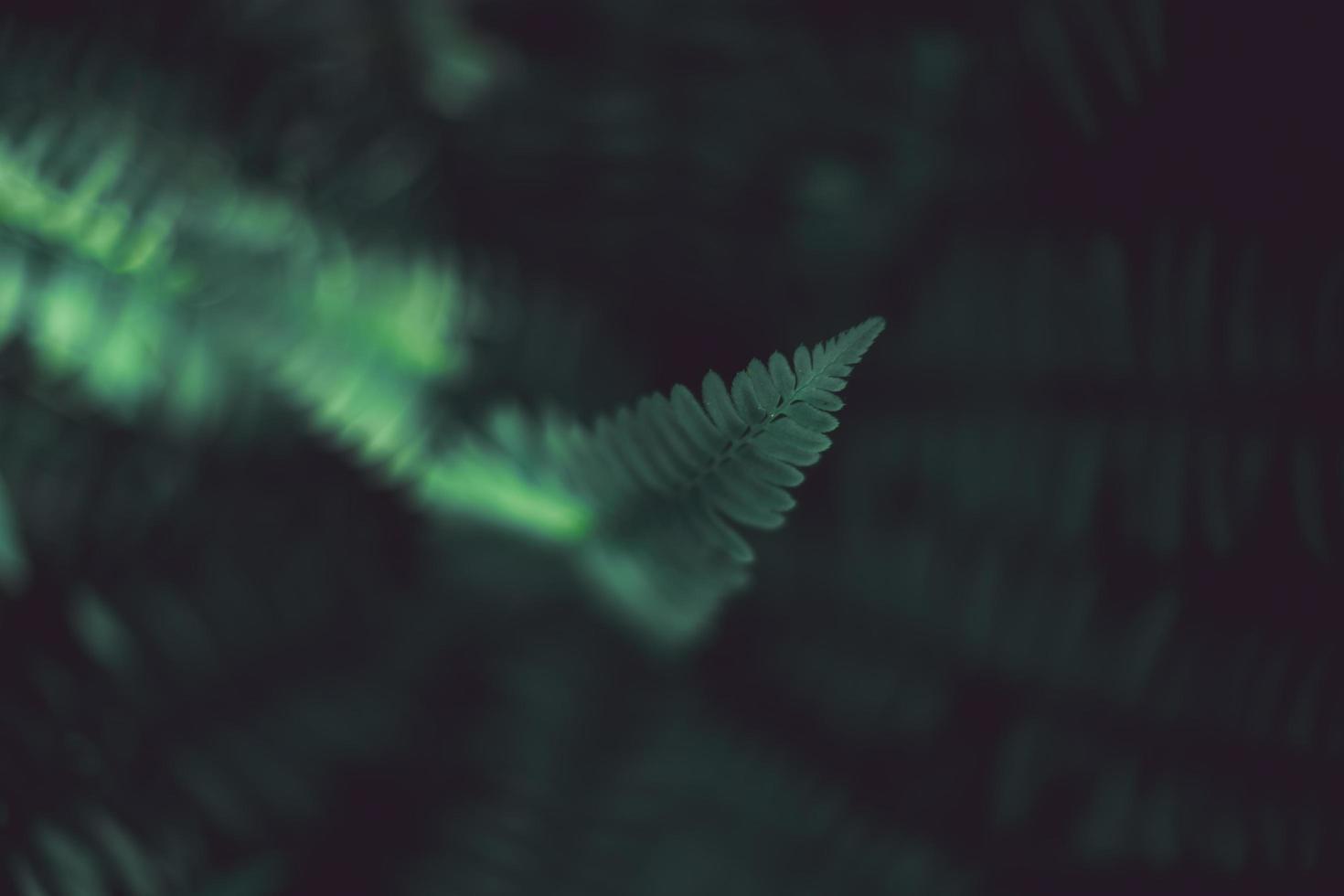 kluster av ormbunkar mot mörk bakgrund foto