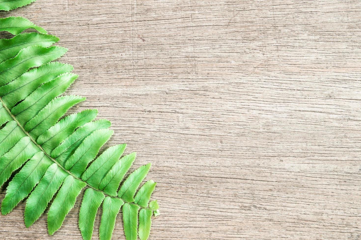 ormbunksblad på träbakgrund foto