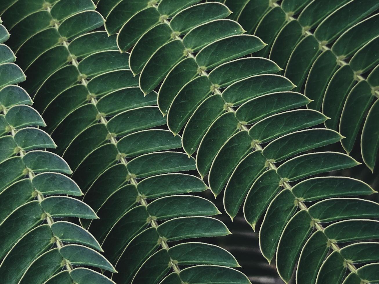 gröna små blad foto
