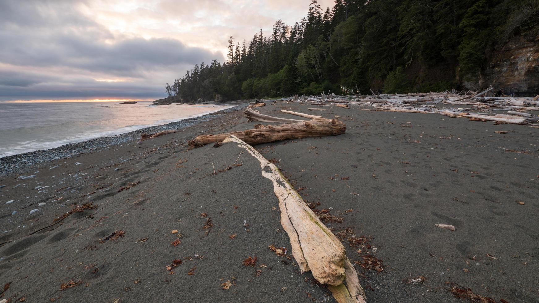 brun trä logg på stranden foto