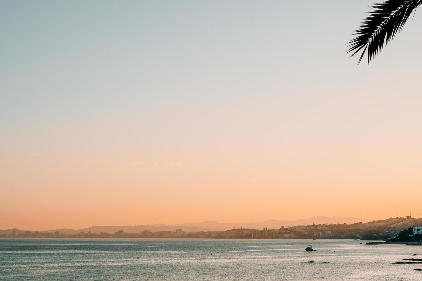 silhuett av palmträdblad och strand foto