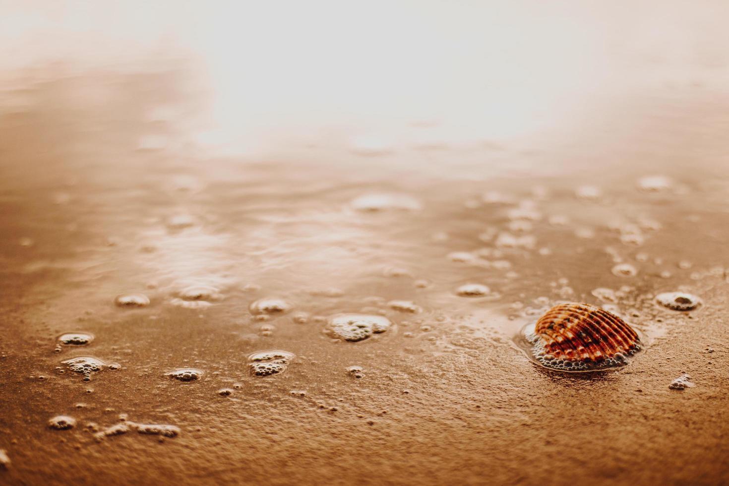 snäckskal på brun sand foto