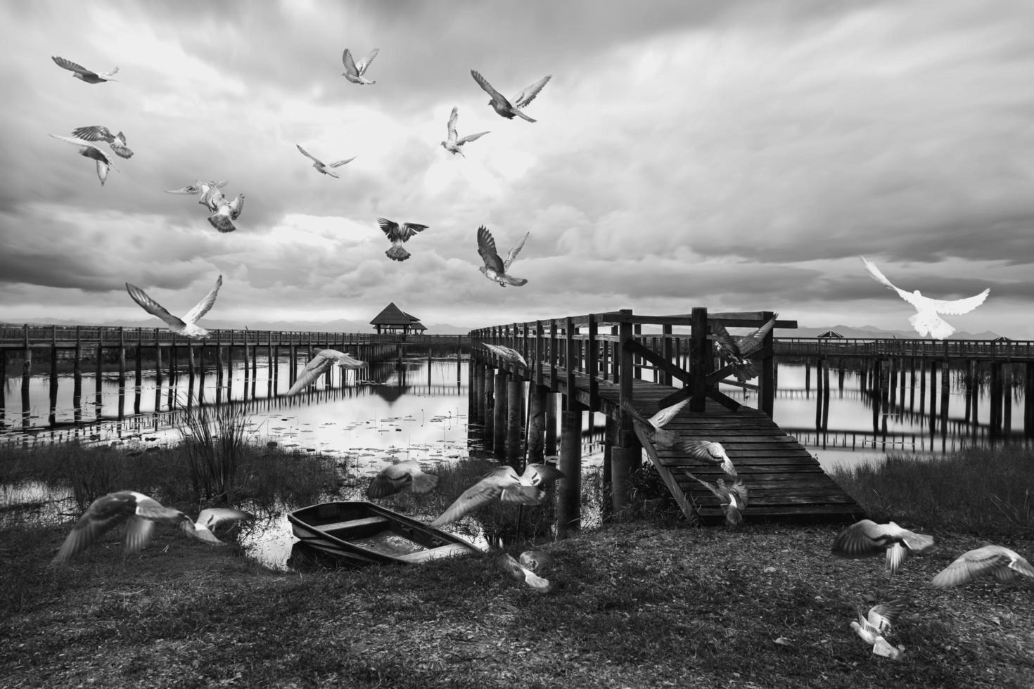 svartvitt foto av duvor vid sjön