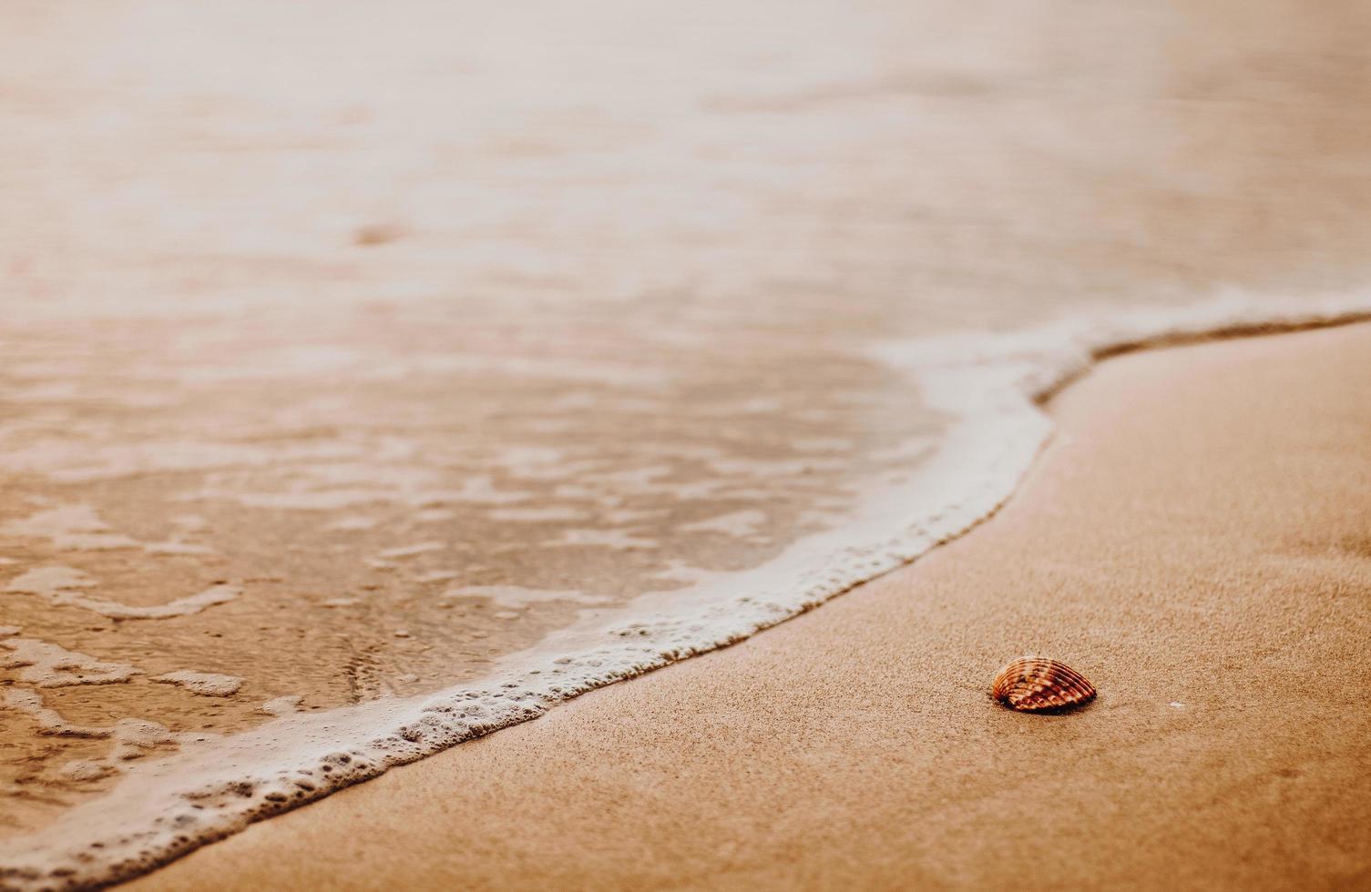 snäckskal på stranden på gyllene timmar foto