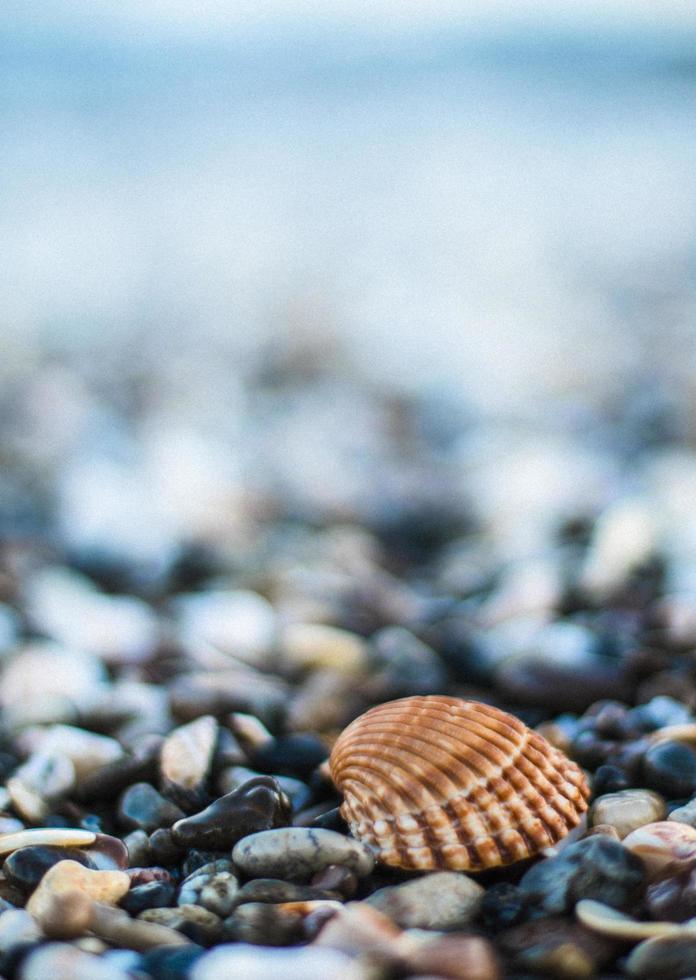 snäckskal och stenar på stranden foto