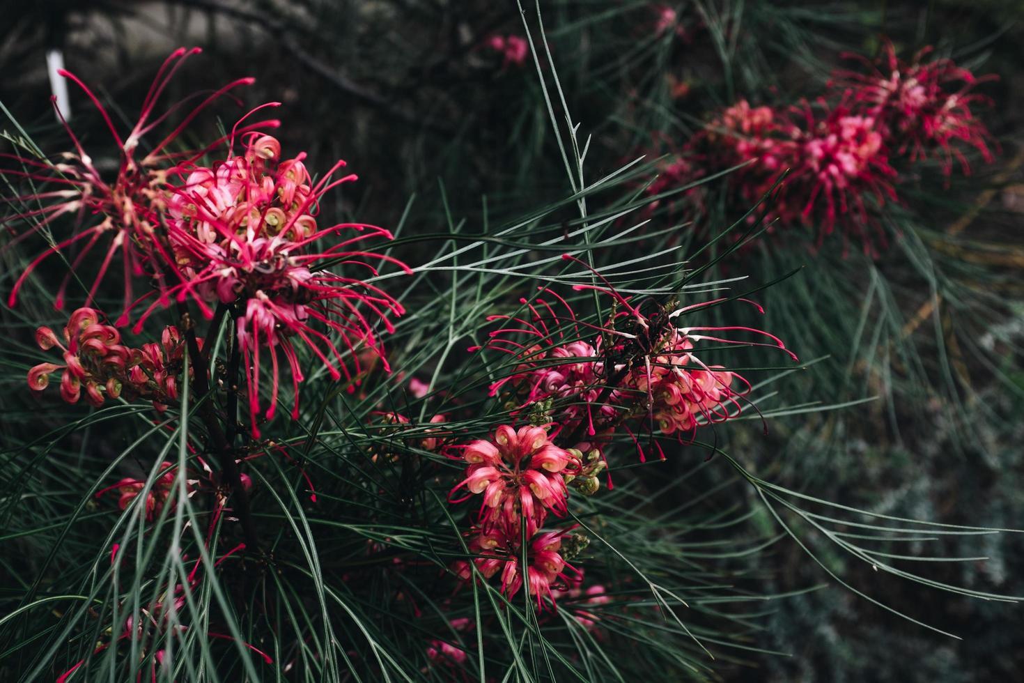 närbild av röd blomma foto