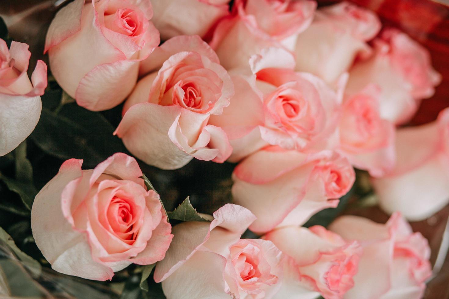 rosa rosbukett foto