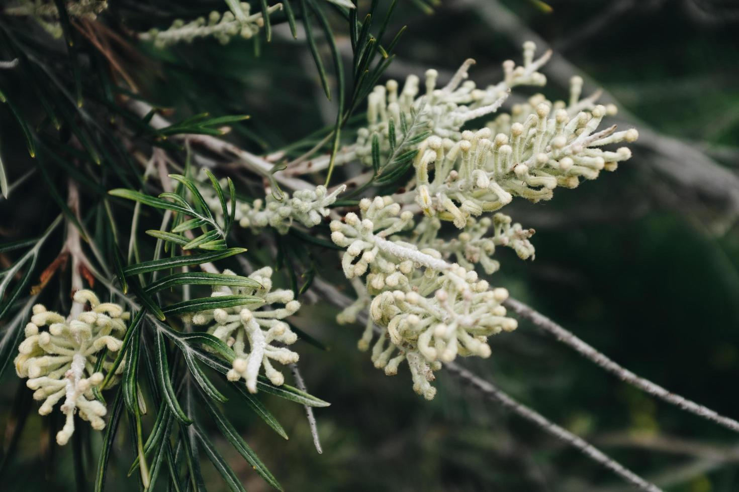 vitbladad blomma foto