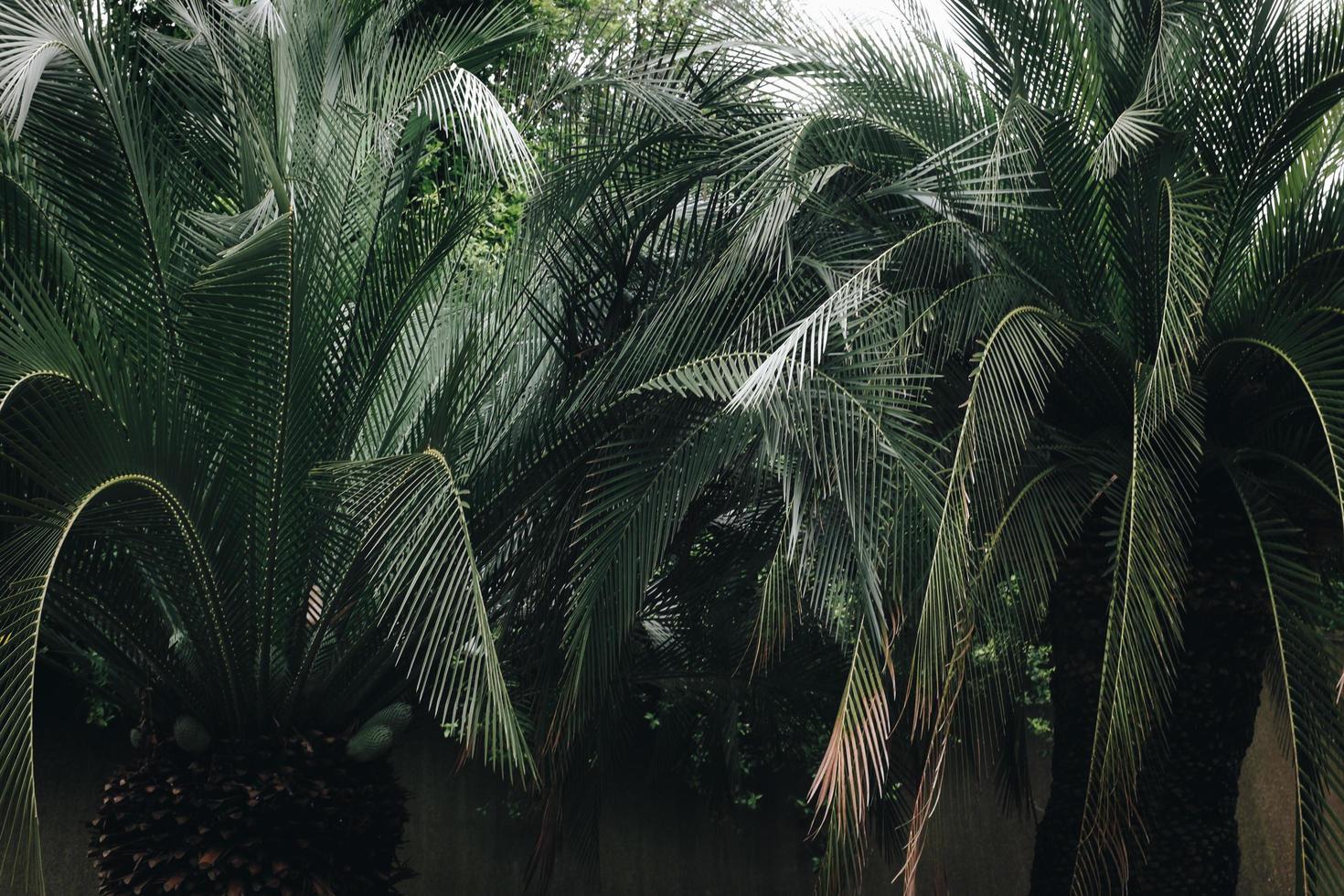 grönt blad palmträd foto
