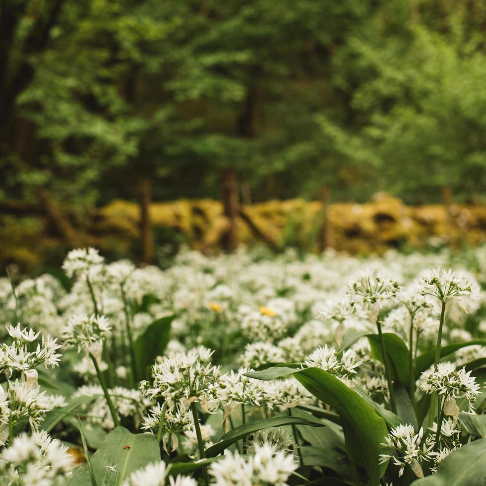 landskap av blomma fält foto