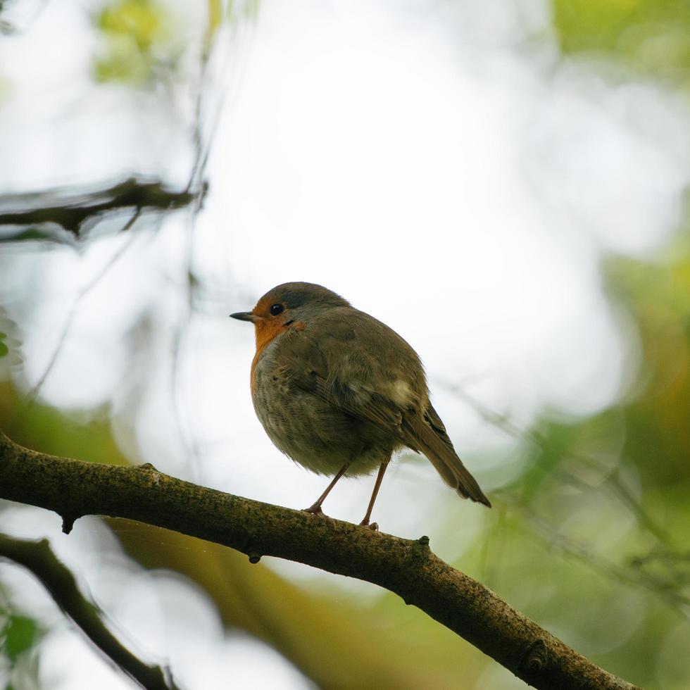liten fågel på trädgren foto