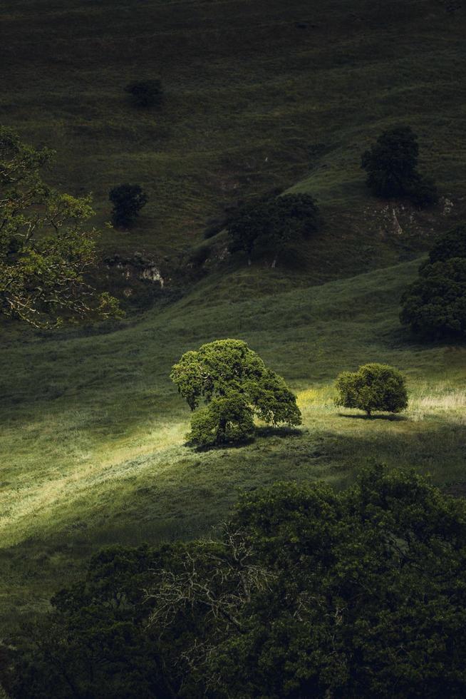 grönt betesmark med solljus foto