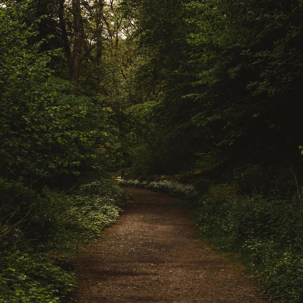 brun grusväg foto