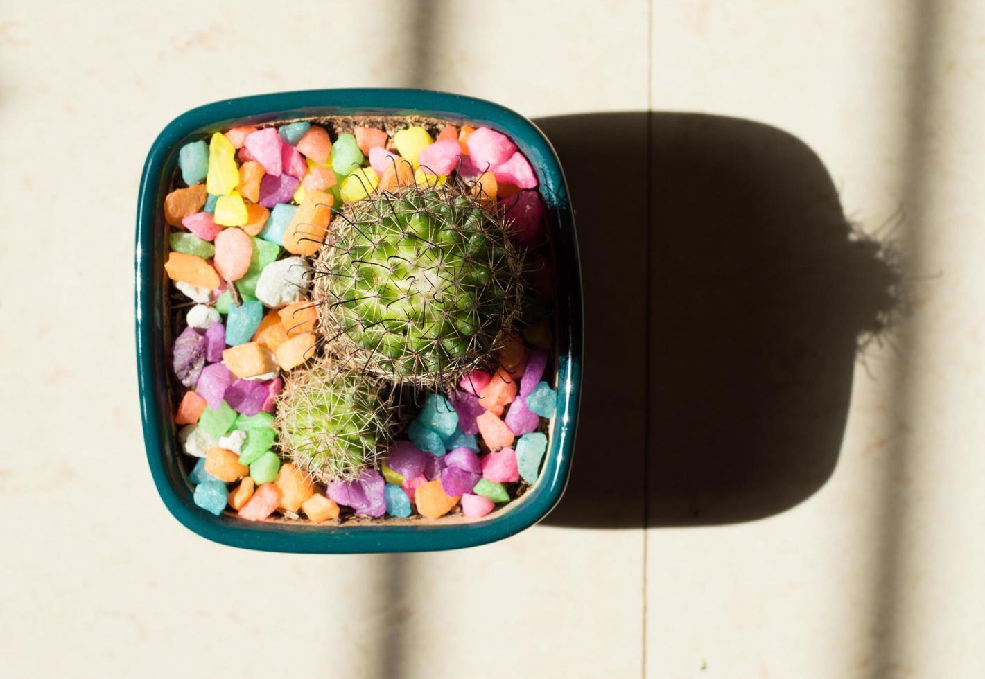 grön kaktusväxt i grå kruka foto