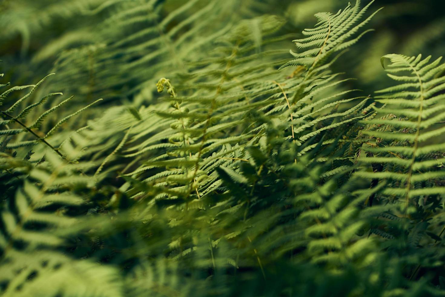 gröna ormbunke växter foto