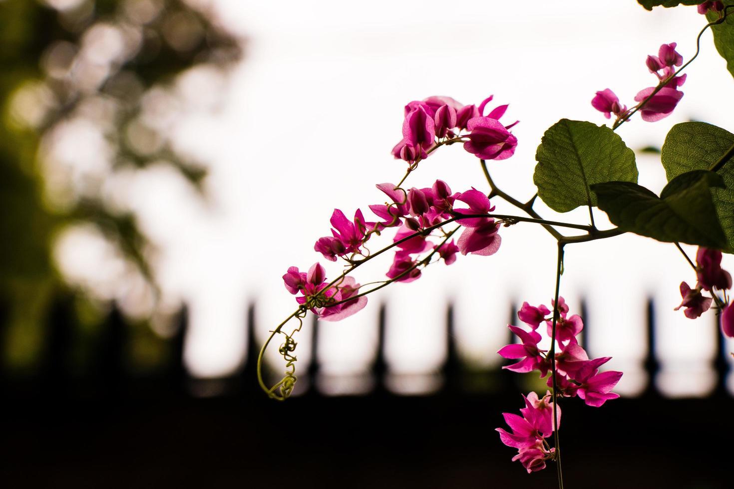 gren med rosa blommor foto