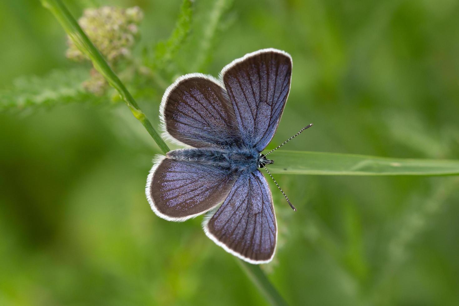 blå fjäril på stam foto