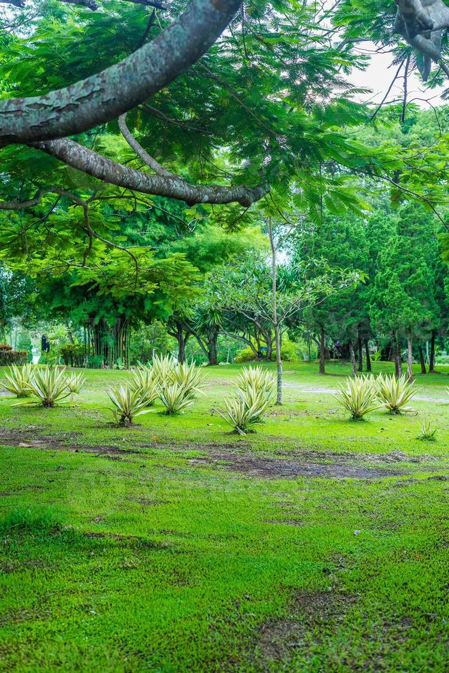fredlig trädgård grönt träd foto