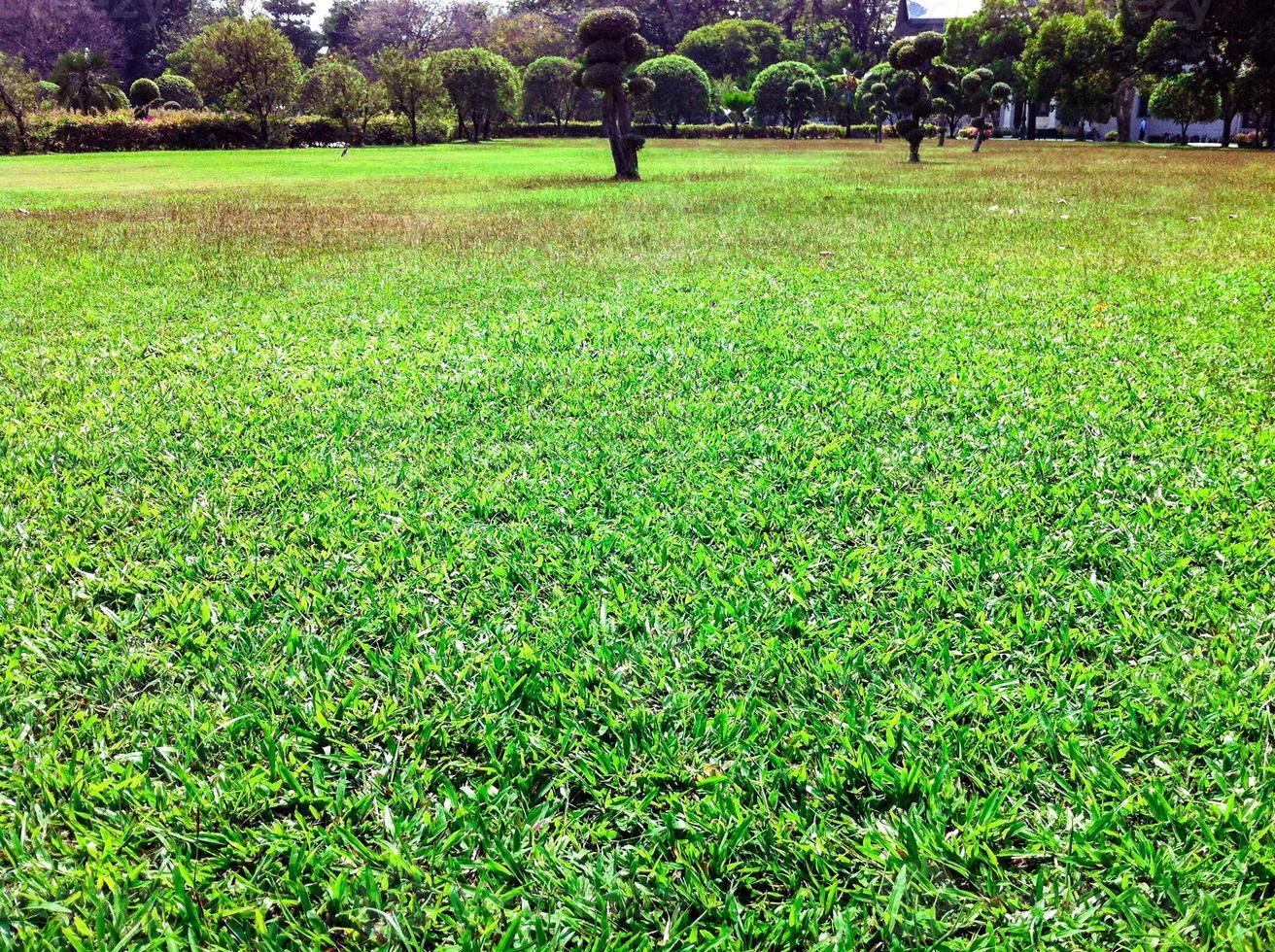 grön gräsmatta i trädgården vacker foto