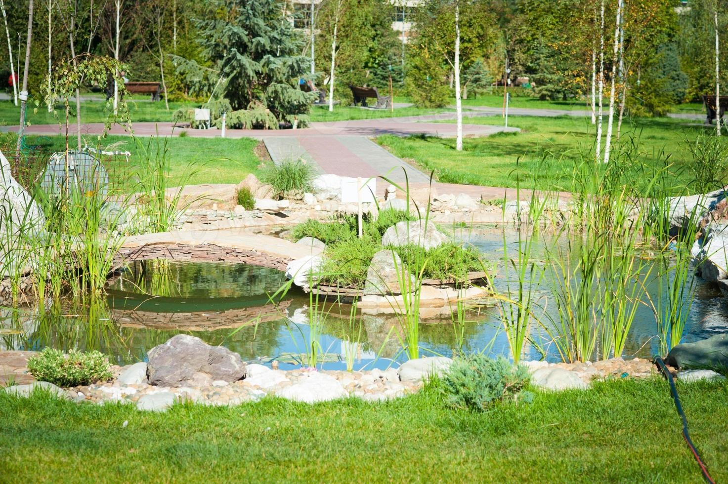 lilla damm i parken foto