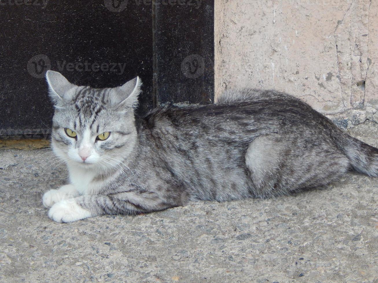 katt är arg på fotografen foto