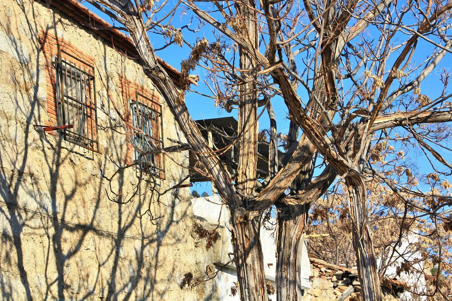 hus med träd framför foto