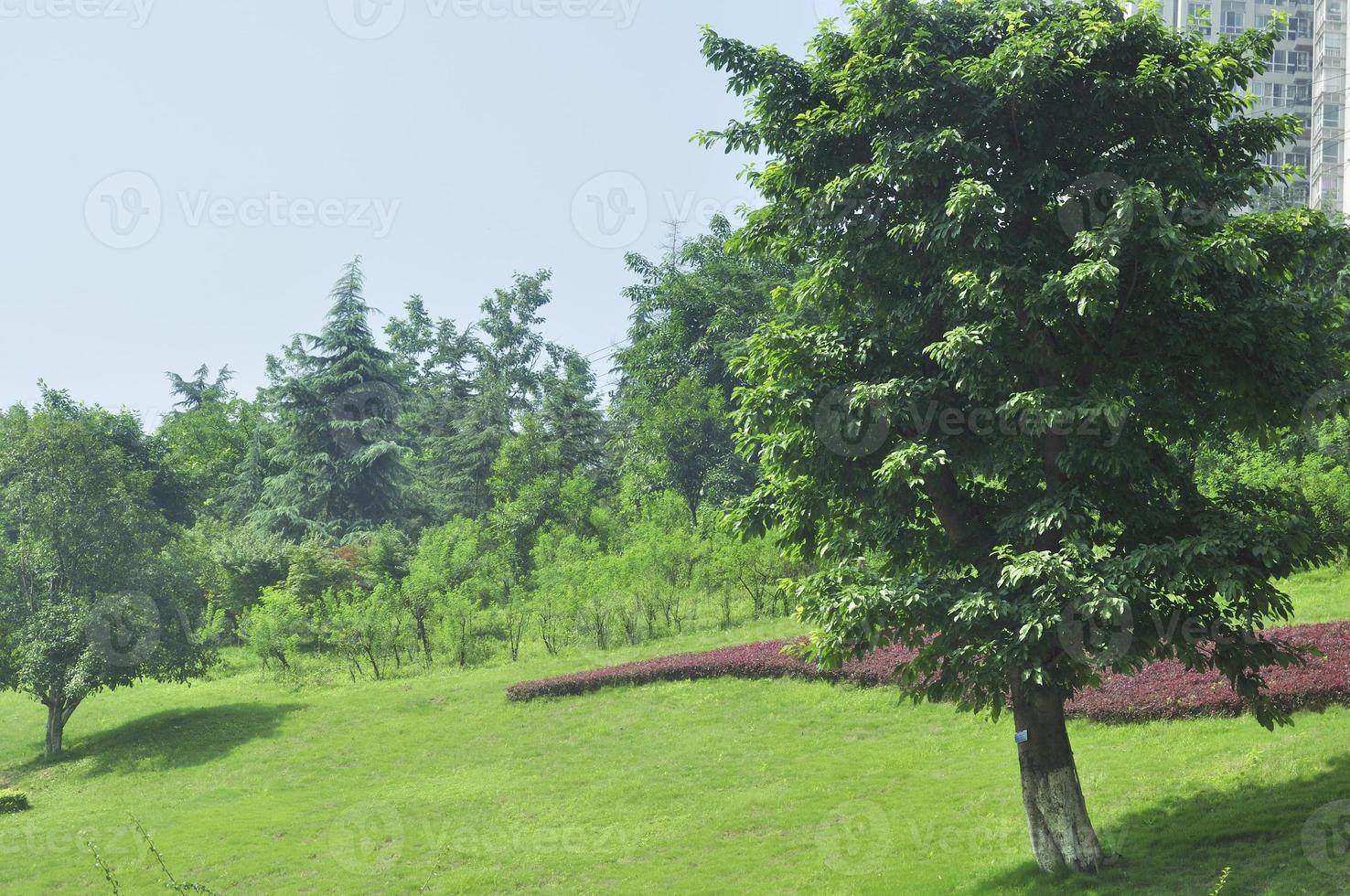 lugn trädgård foto