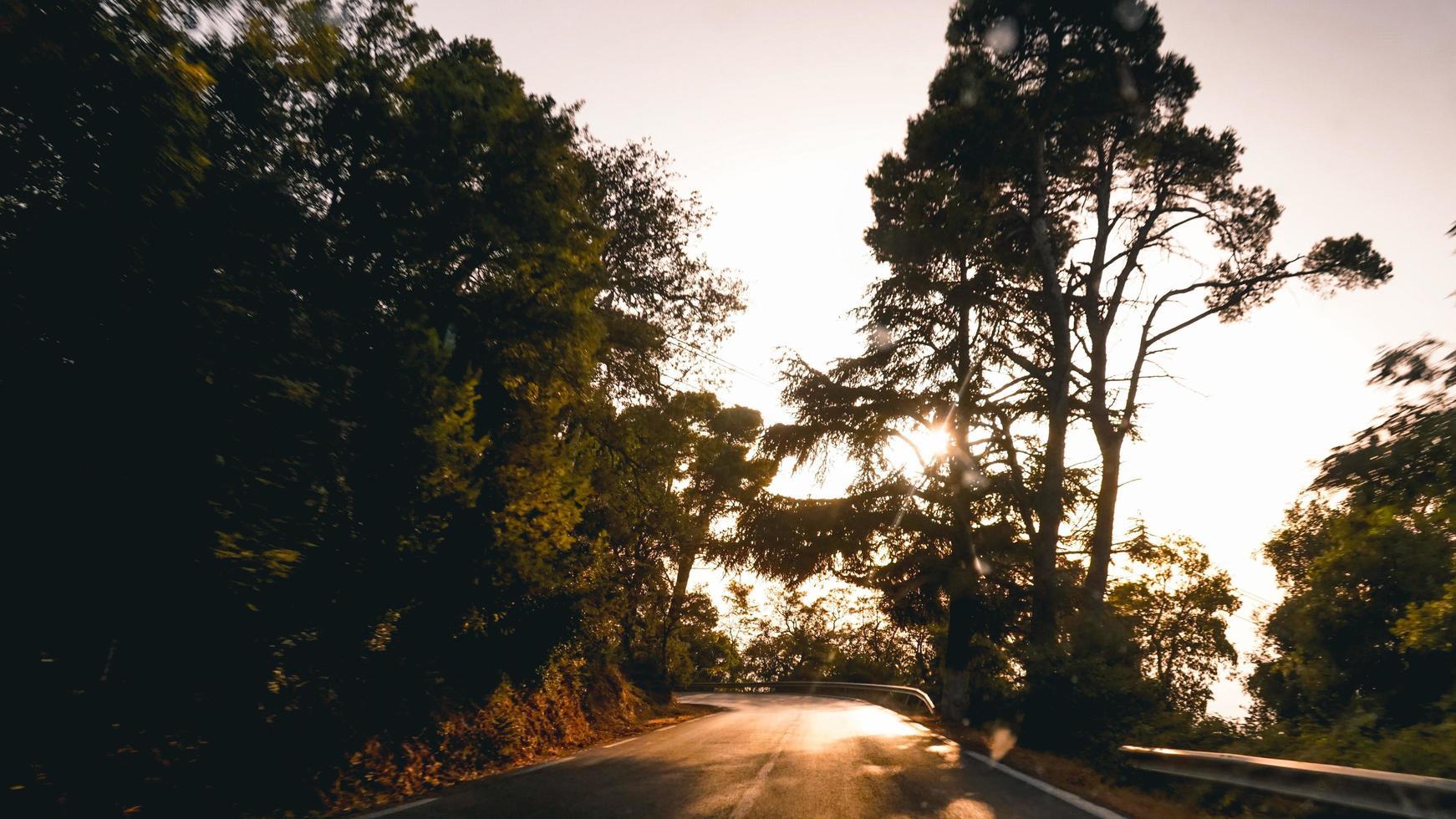 silhuetter av träd under gyllene timmen foto