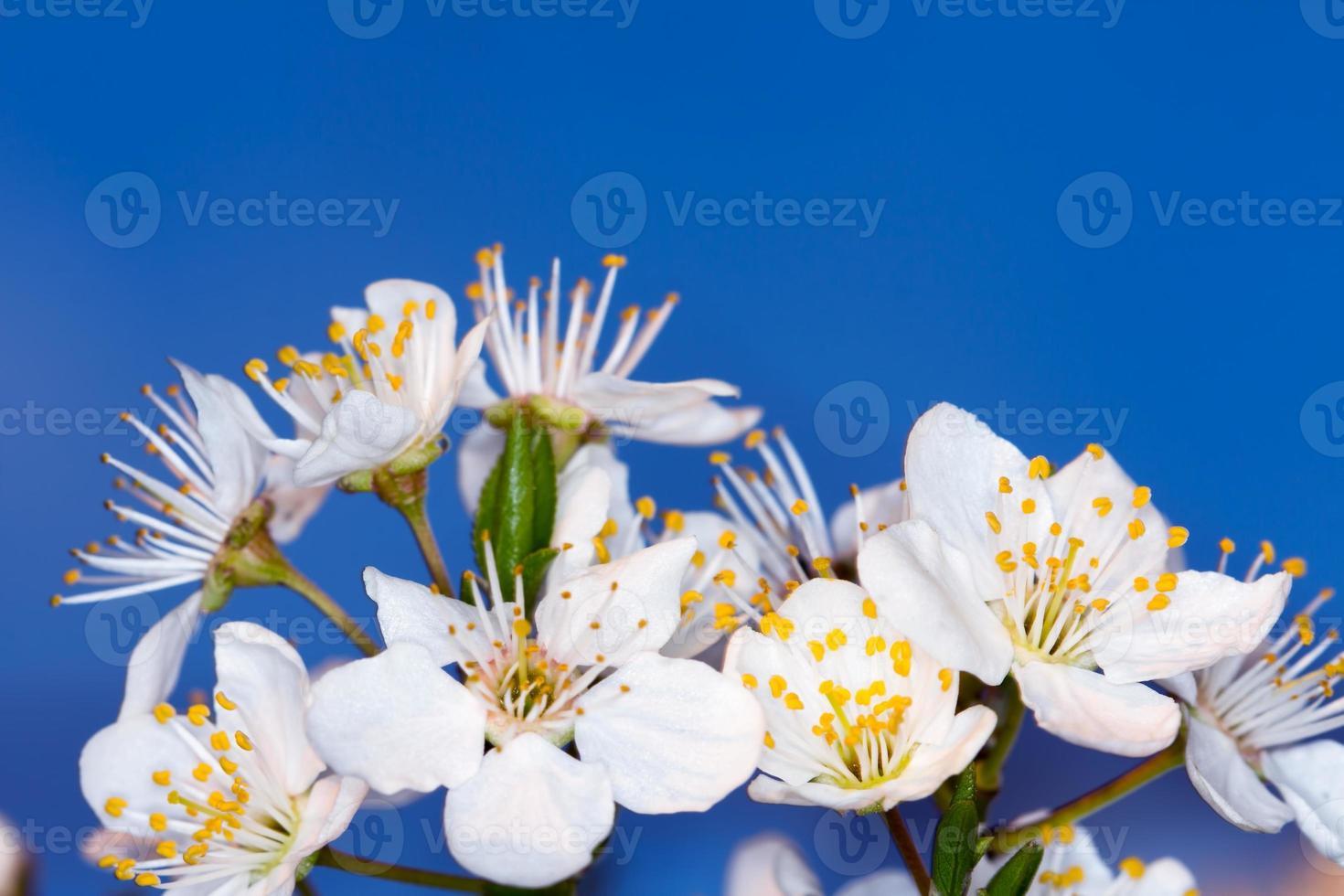 vacker blomma, vår foto