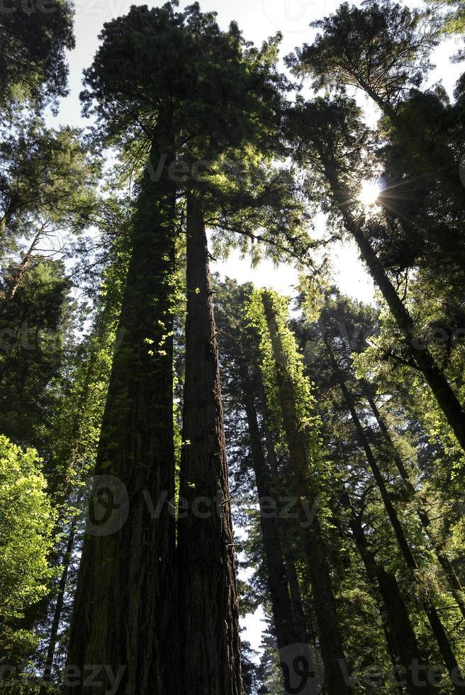 gröna jättar foto