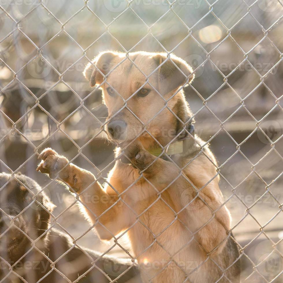 hund i skydd foto