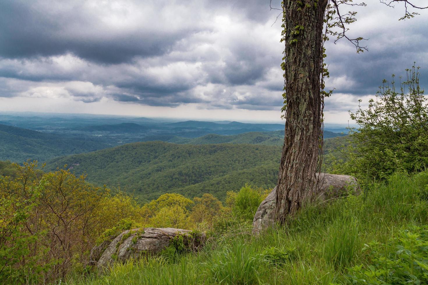träd med berg och mörk molnig himmel foto