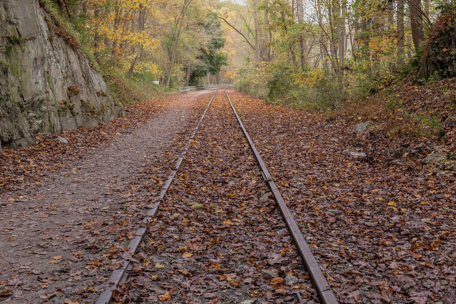 järnvägsspår korsade med fallna löv foto