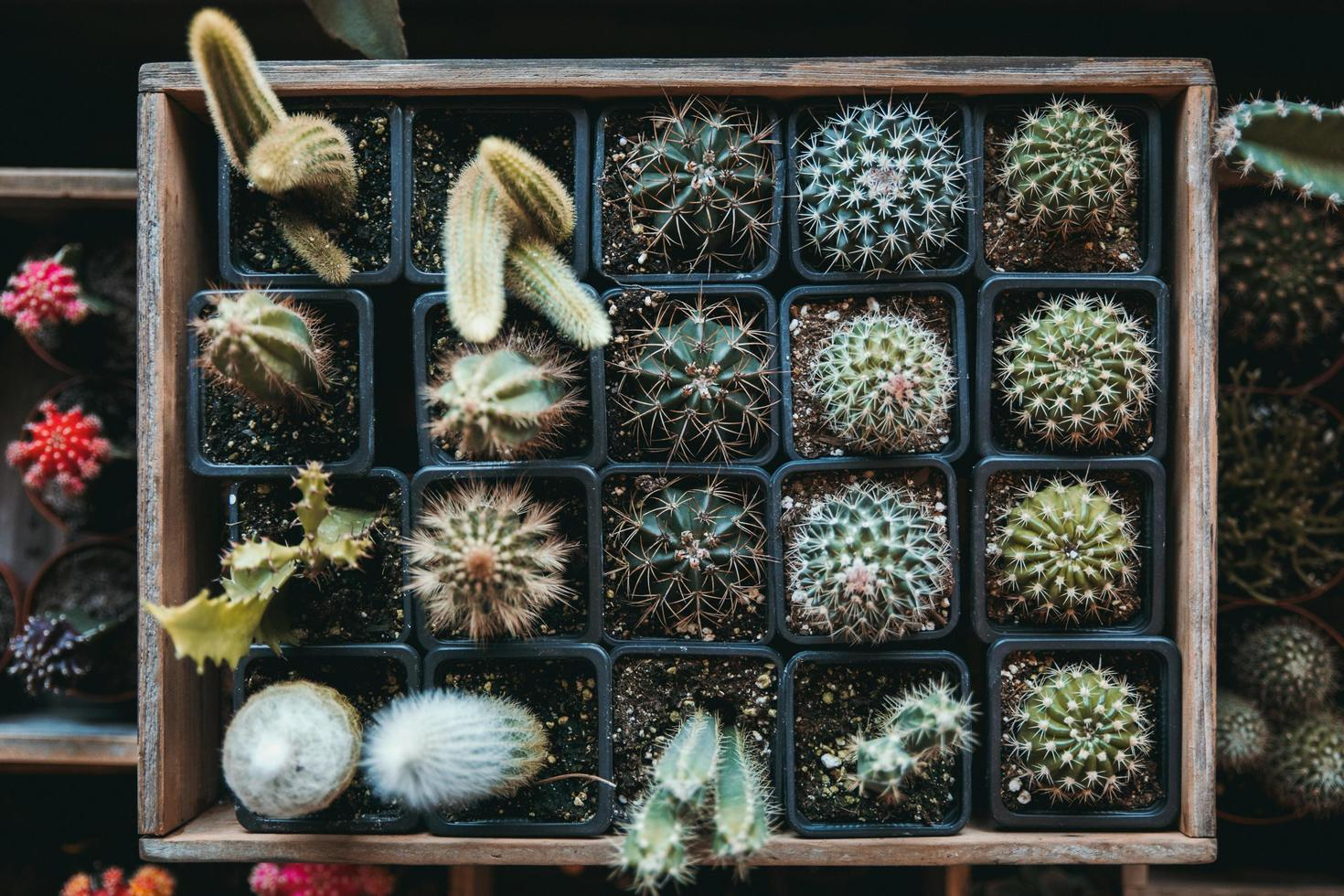 en låda full av gröna kaktusar foto