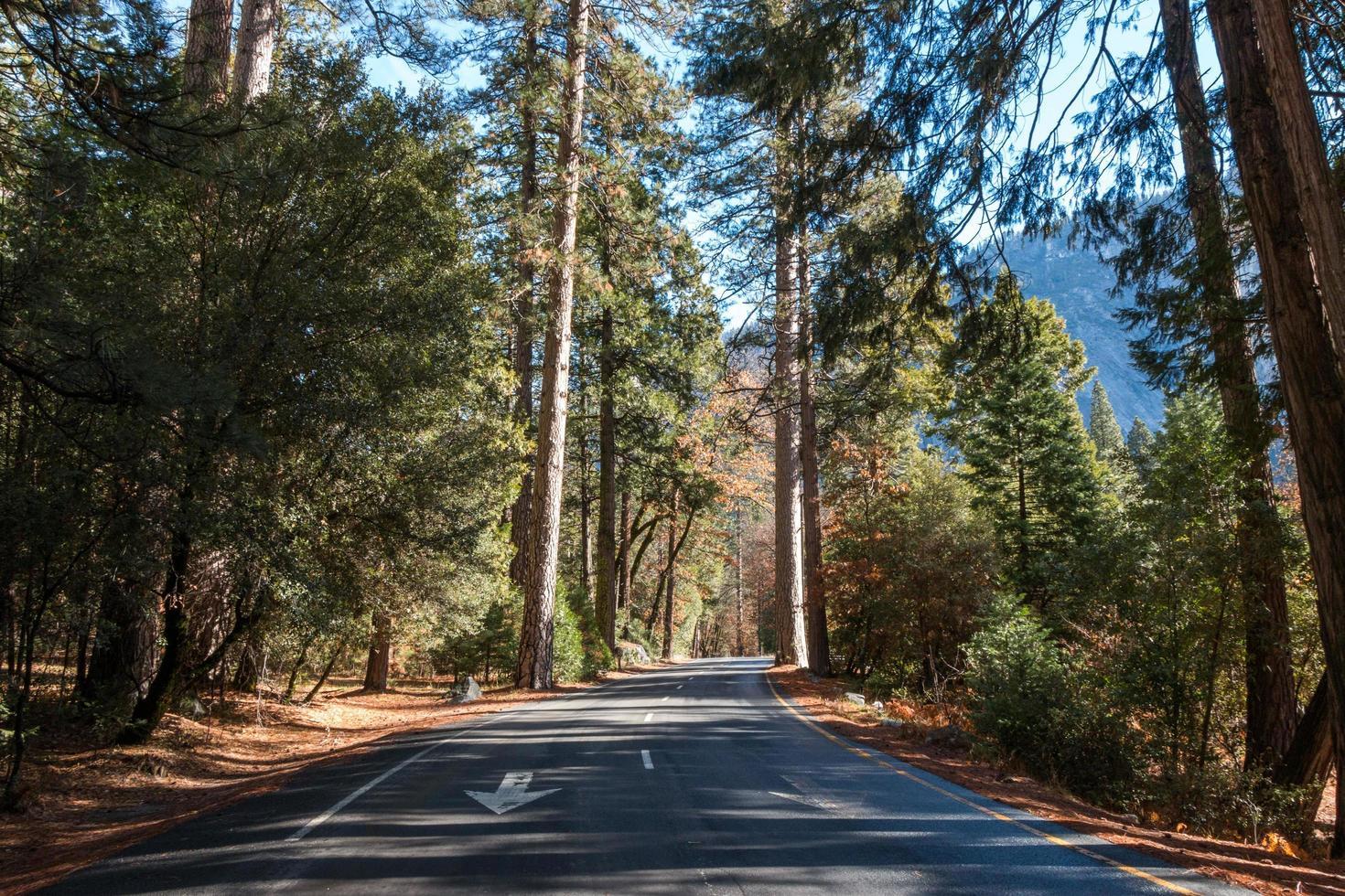 väg mellan träd foto