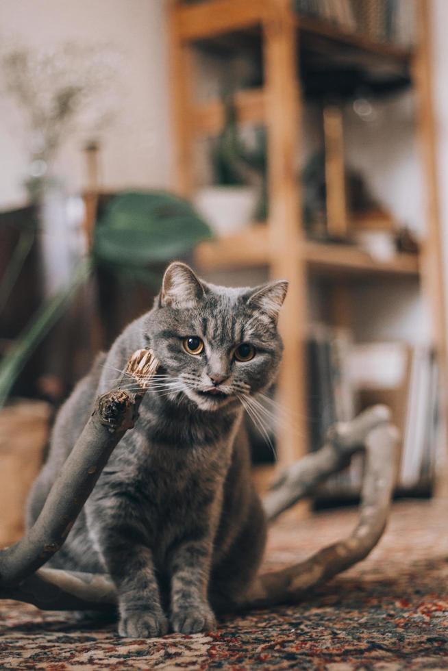 grunt fokusfoto av katt foto