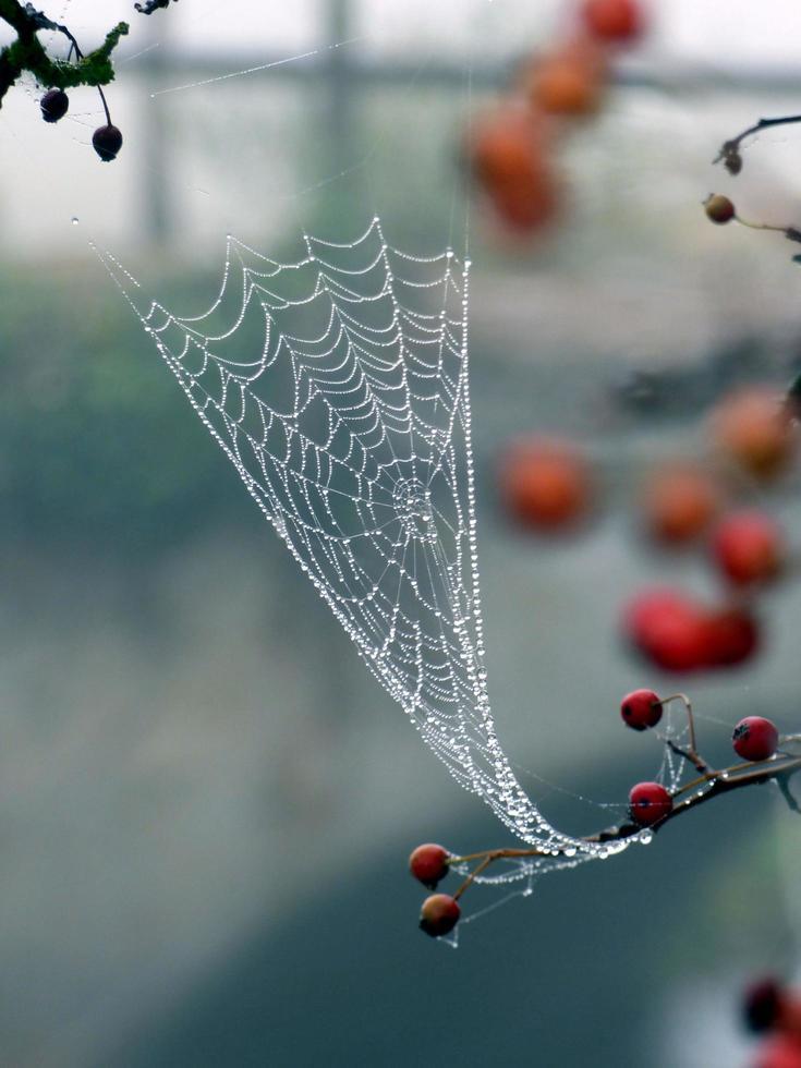daggdroppar på ett spindelnät foto