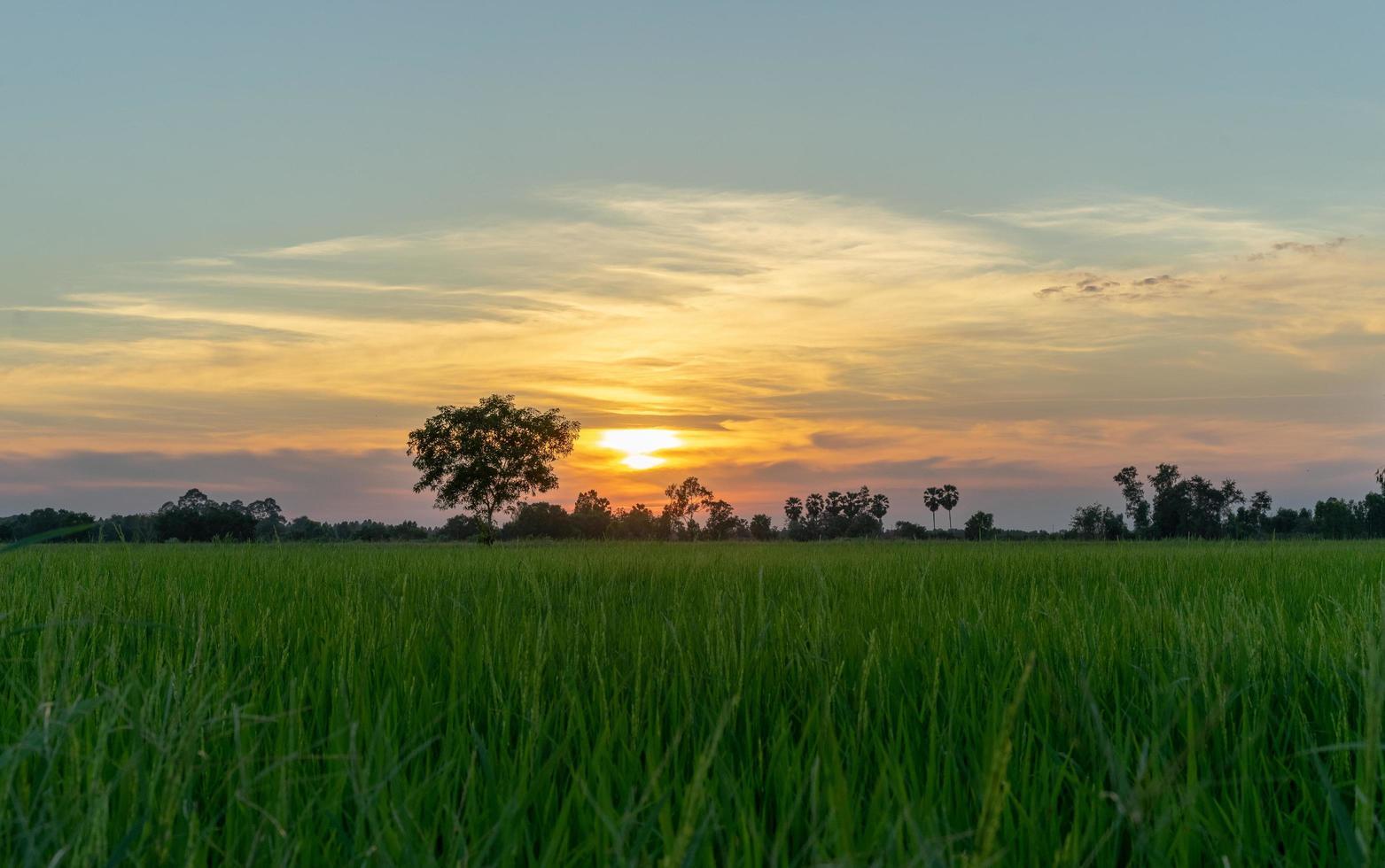 solnedgång över grönt fält foto