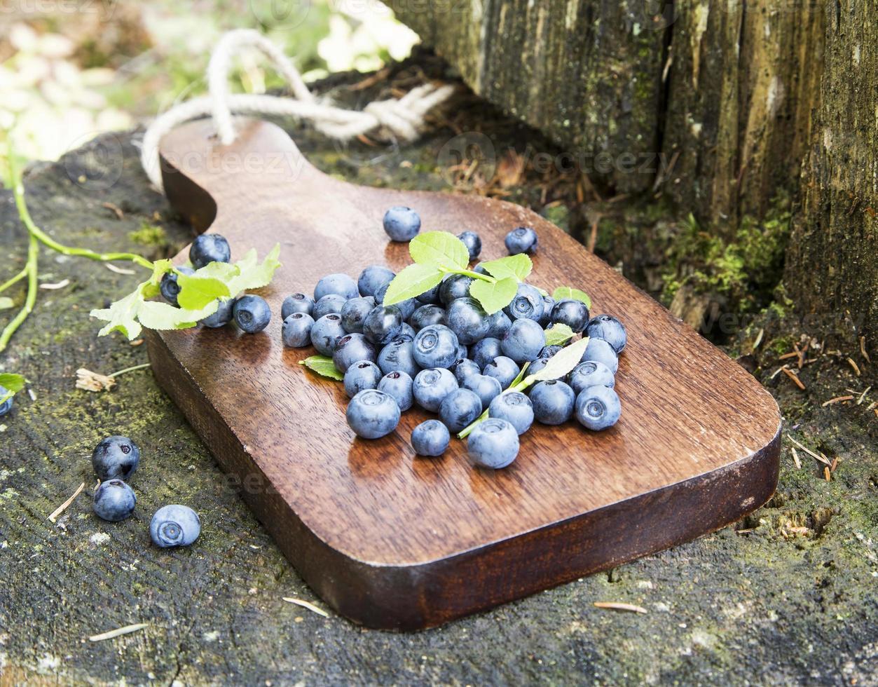 blåbär nyligen plockade från skogen foto