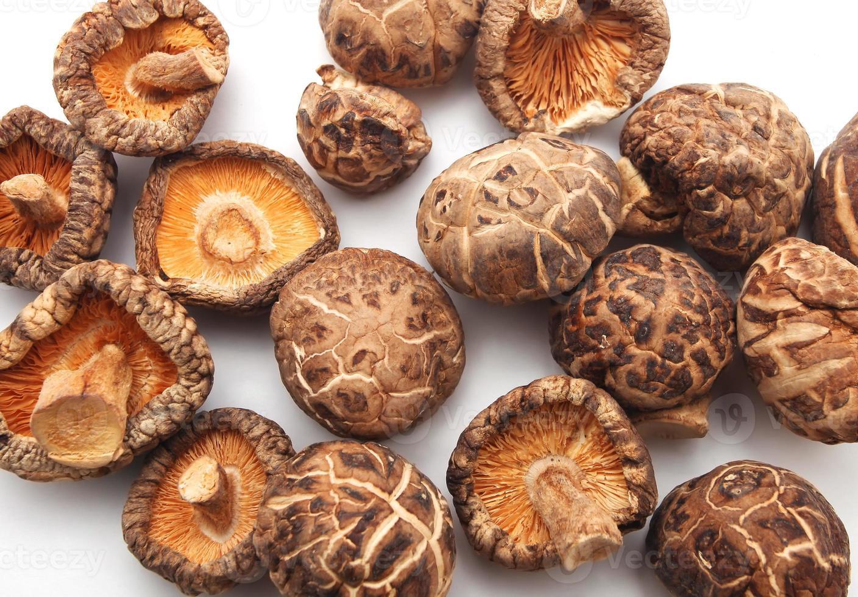 torkade svampar foto