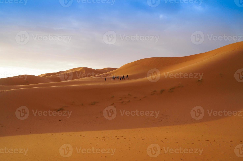 turister åker på en kameltur i Saharaöknen foto