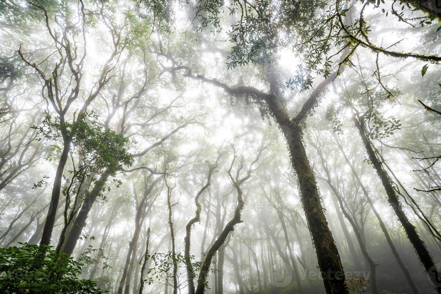trädskog i höstsäsongen av Thailand foto