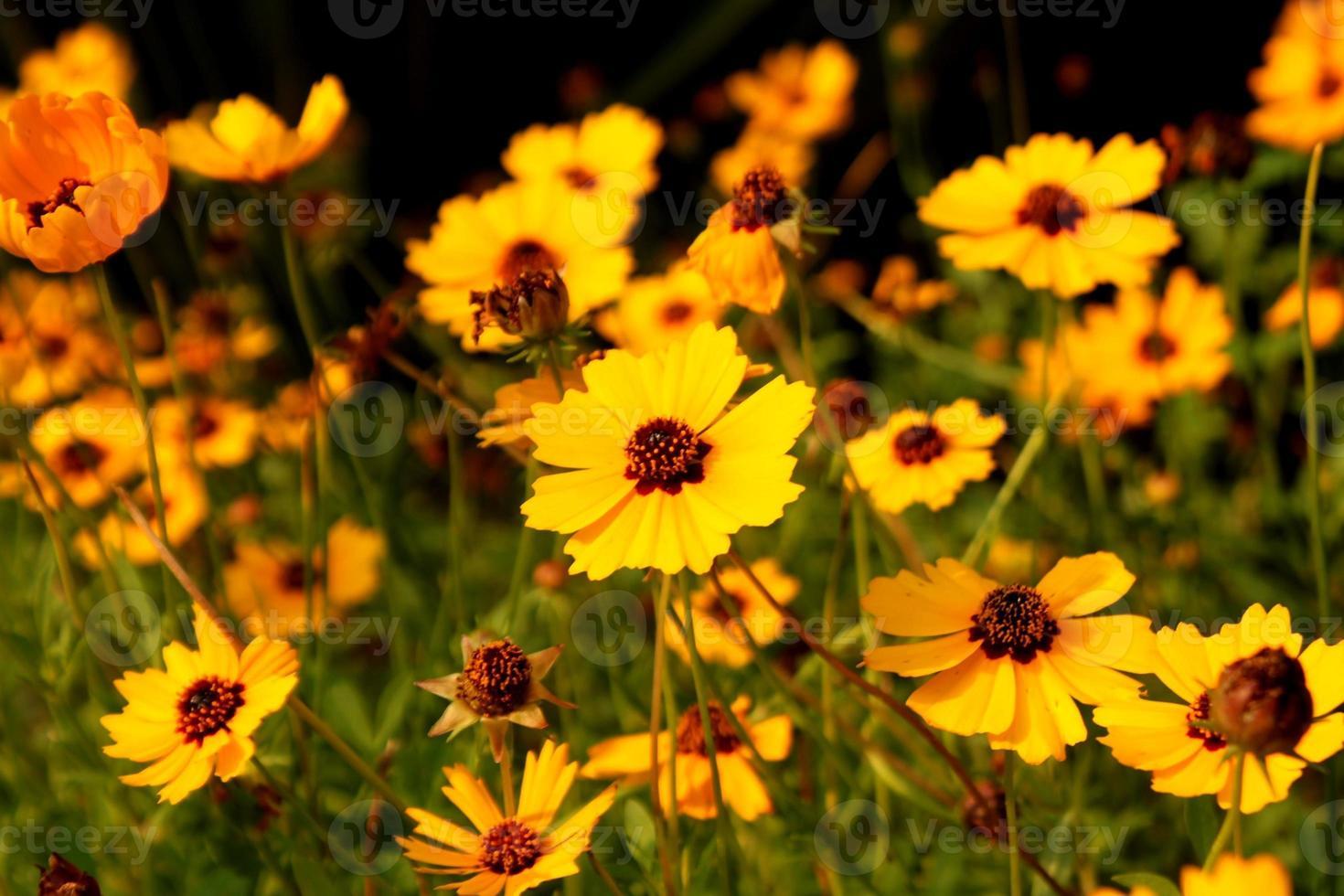 skog av blommor foto