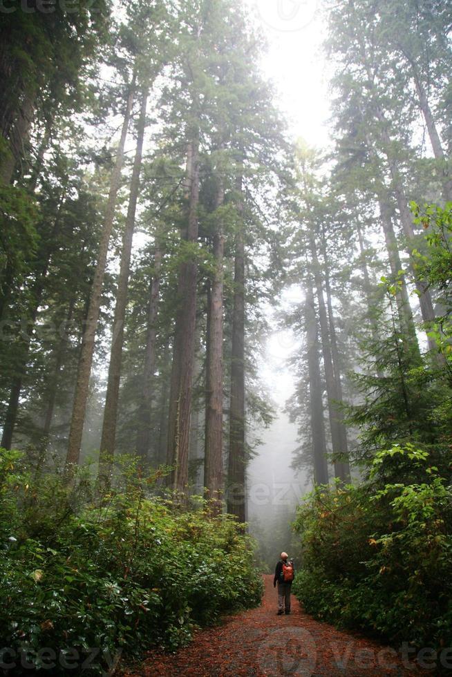 lövträdskogsstig med vandrare foto