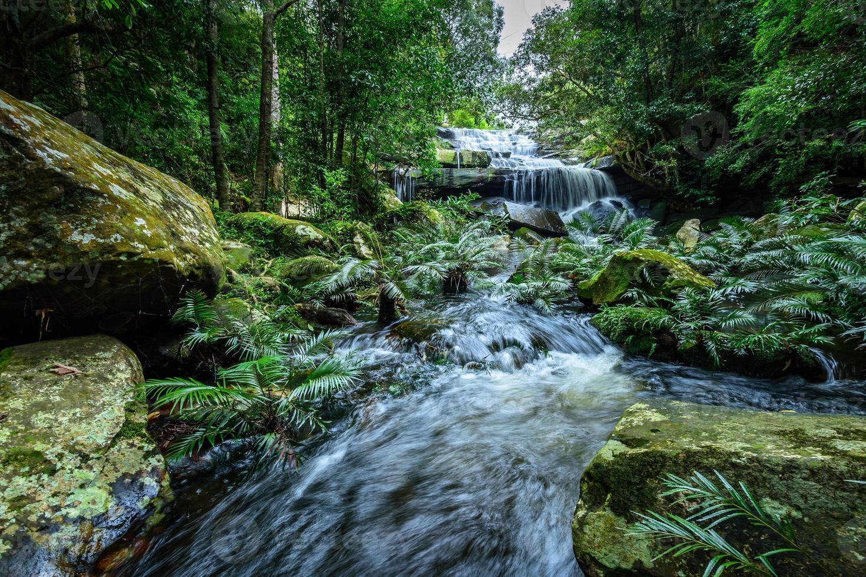 djup skog vattenfall phu kradueng nationalpark, thailand foto