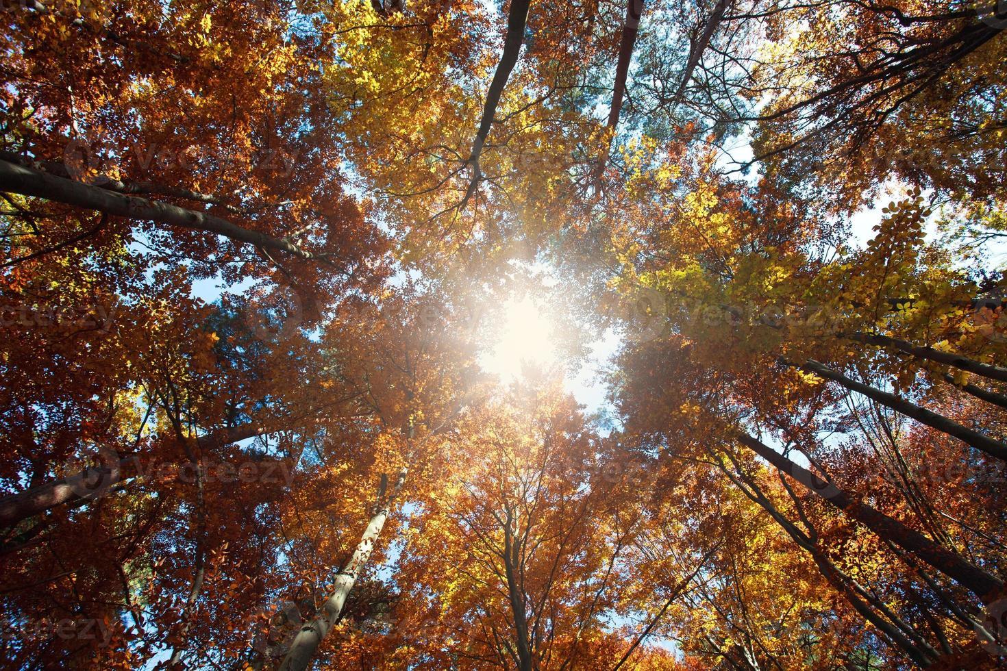 natur bakgrund färgglada höst skog, på solen skiner foto