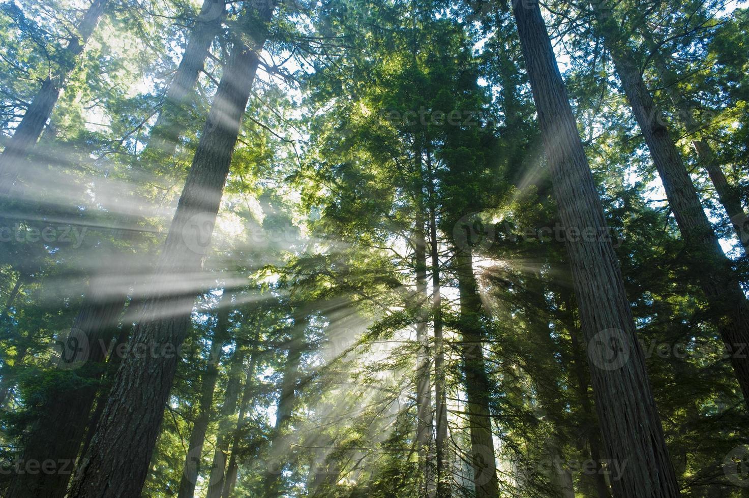 ljusa gudstrålar av ljus i skogen foto