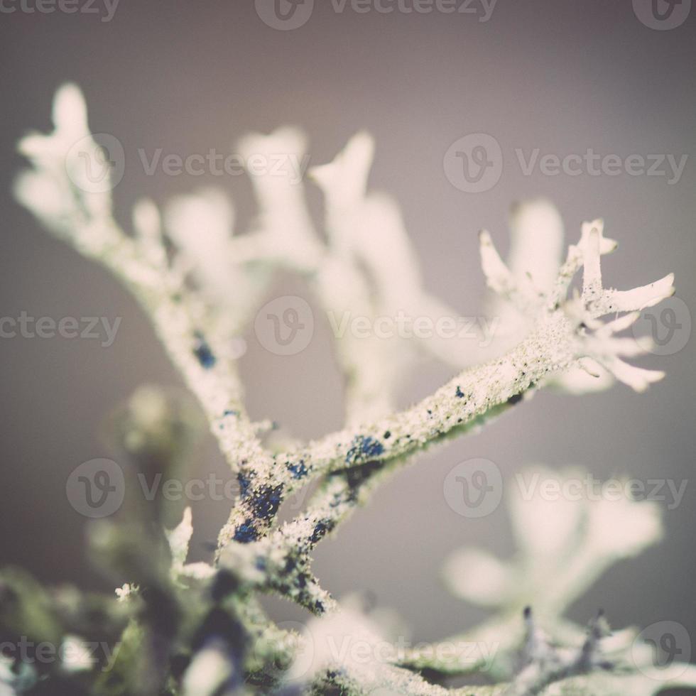 våta växter grenar i vinter skog - retro vintage effekt foto