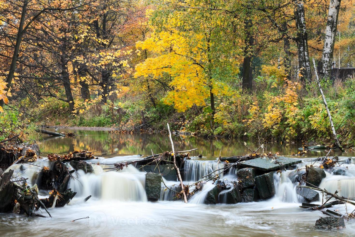 gyllene skog med flödande flodvatten genom stenar på hösten foto