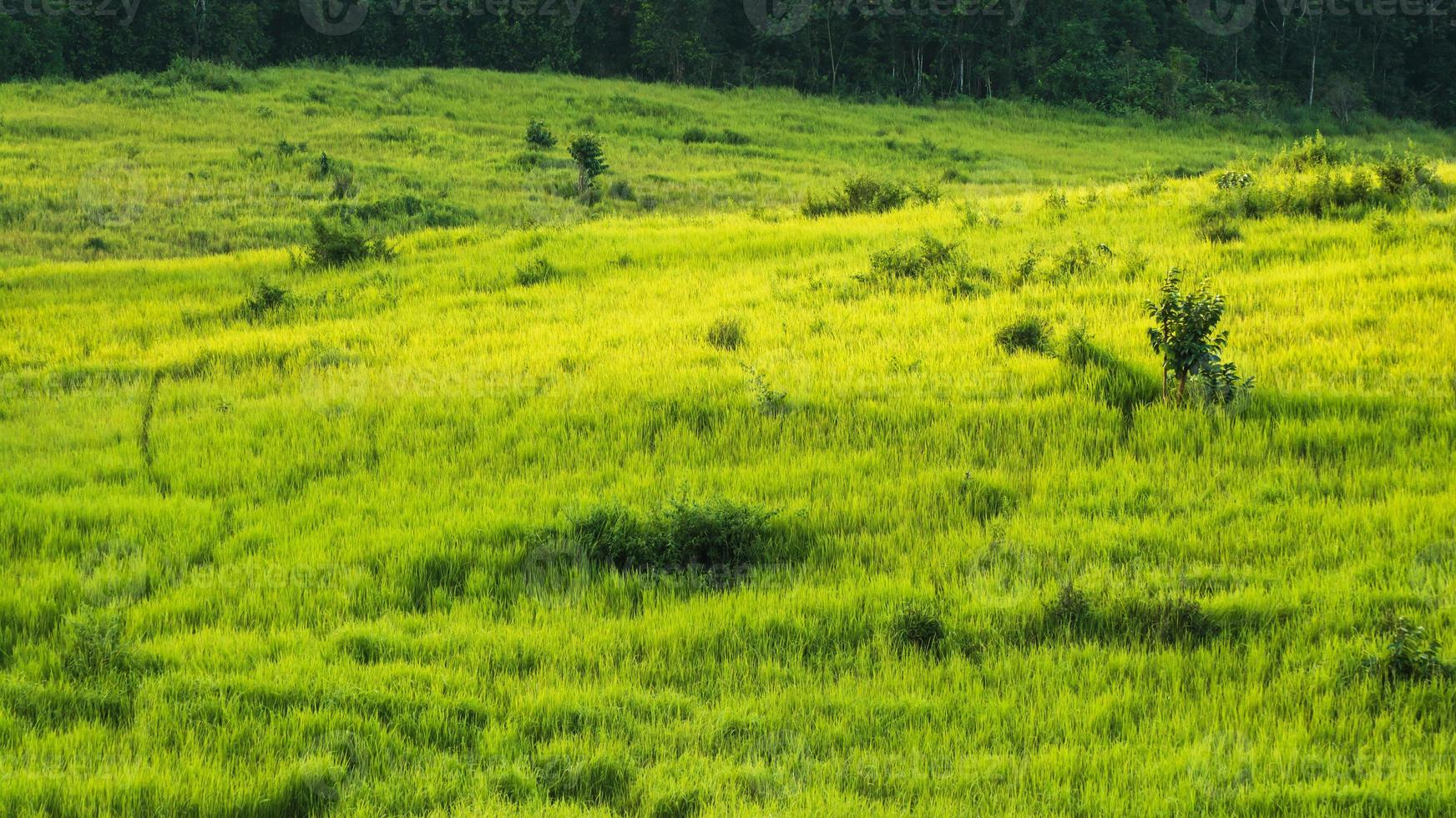 grön äng, Khao Yai National Park Thailand foto